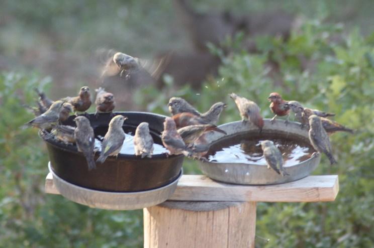 23 BIRDS