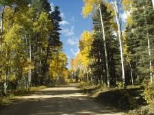 Beaver Meadows Fall Road
